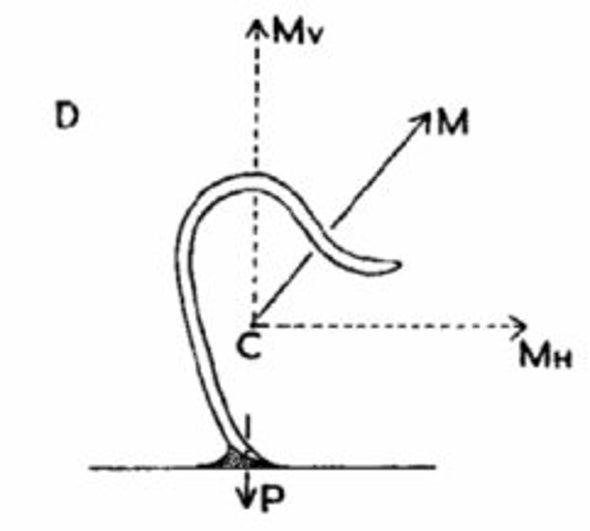pinworm életciklus