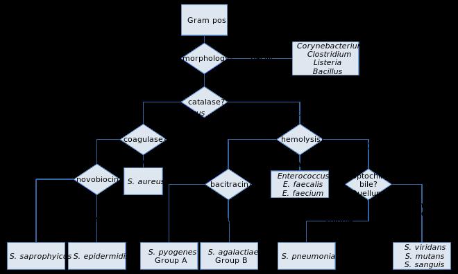 xanthomonas baktériumok