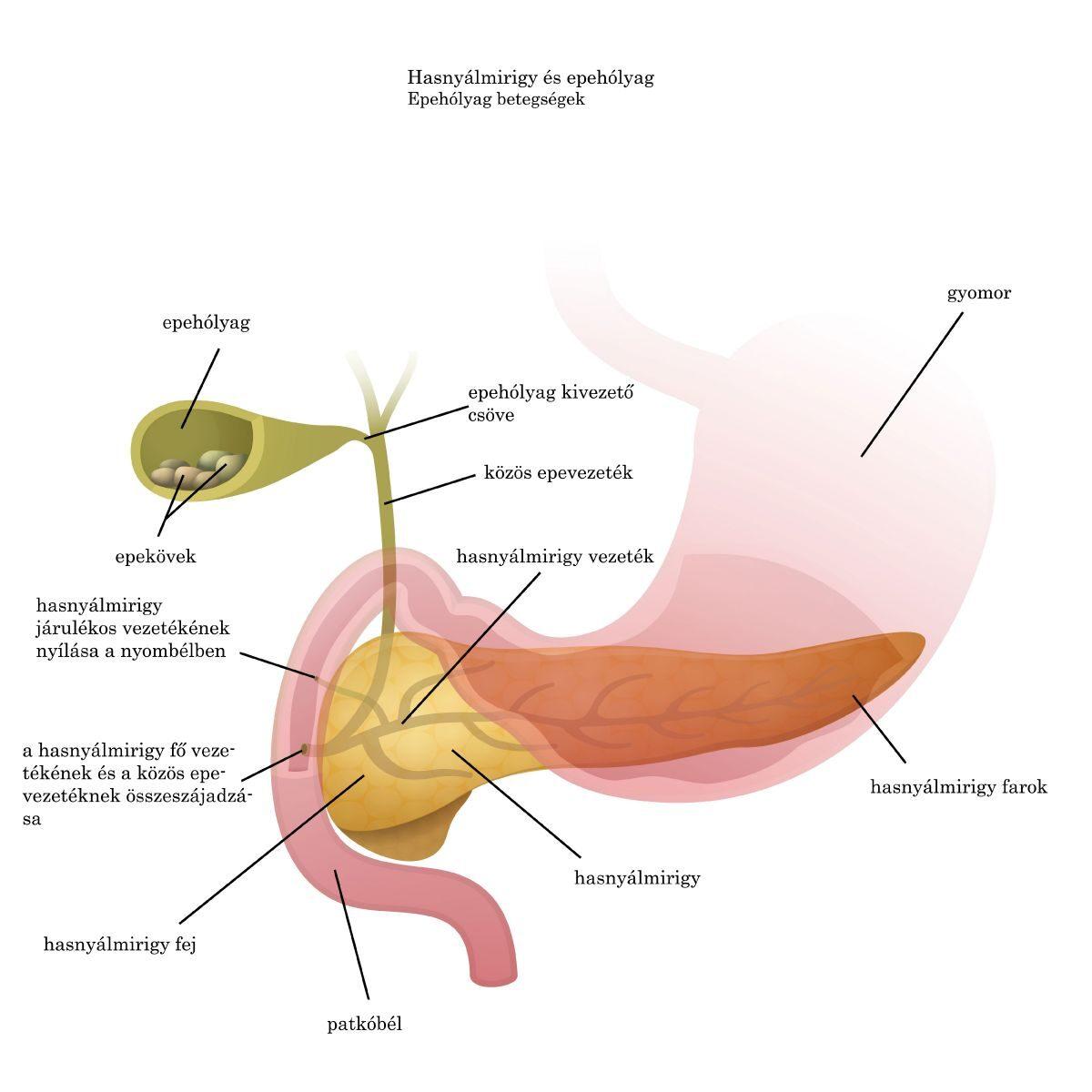 paraziták műtéti kezelése