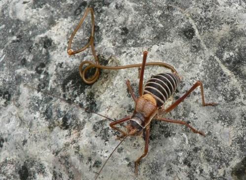 Meztelen csigák paraziták - Gyógyszer férgek orvos