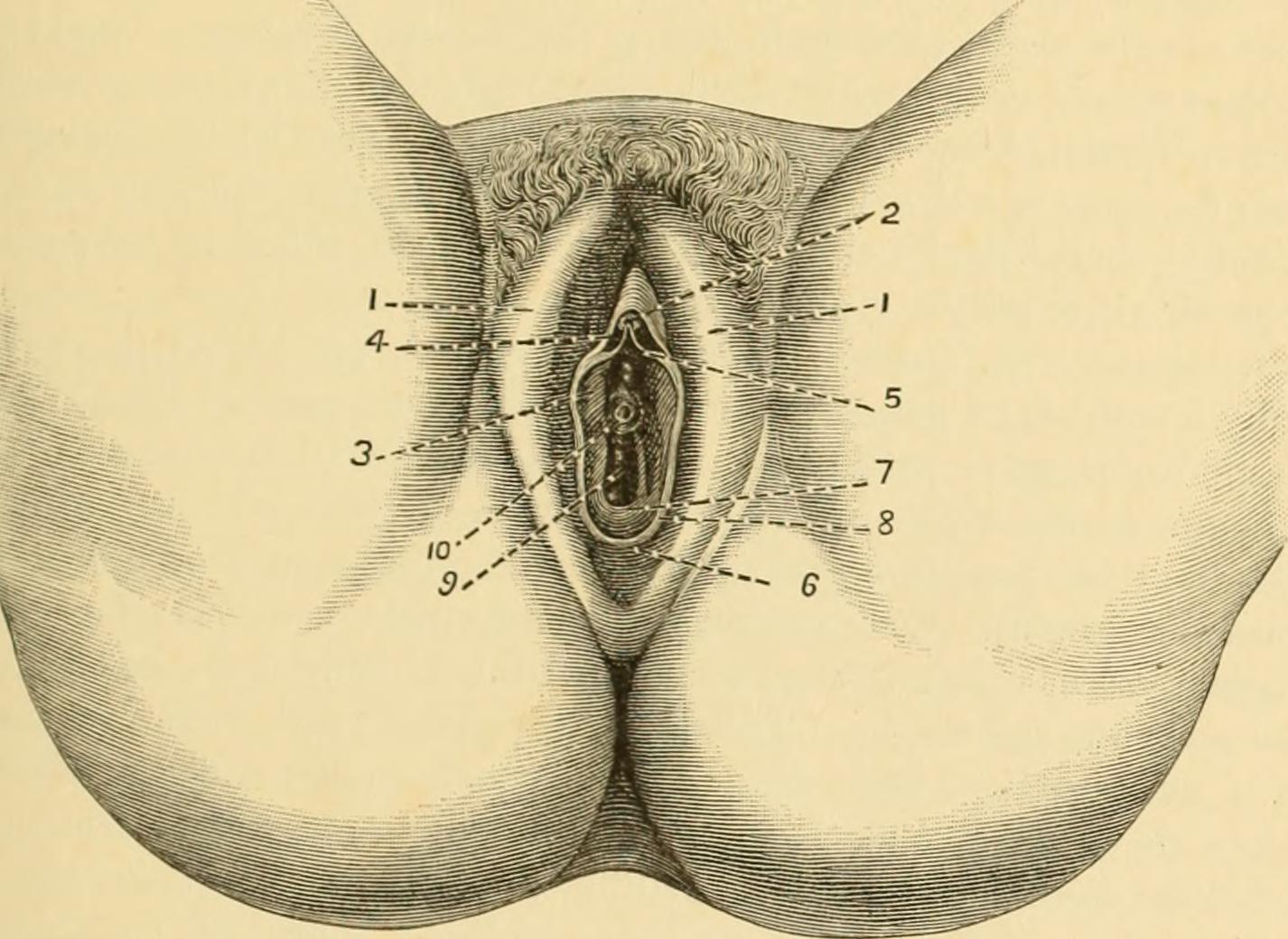 a csikló genitális szemölcsei)