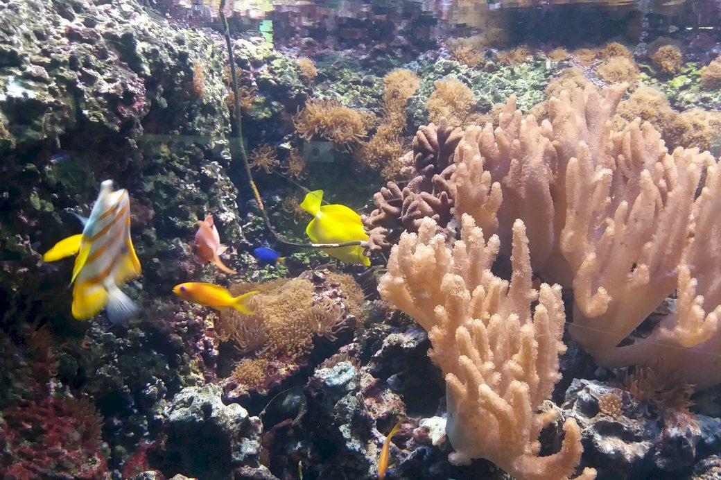 mit kezdjen a halakkal