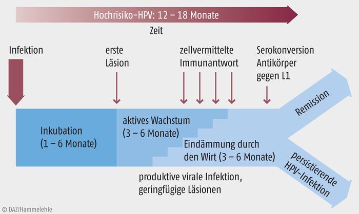 Helminth asztal, Hpv impfung zentrum der gesundheit. Cancerul pulmonar la ce varsta apare