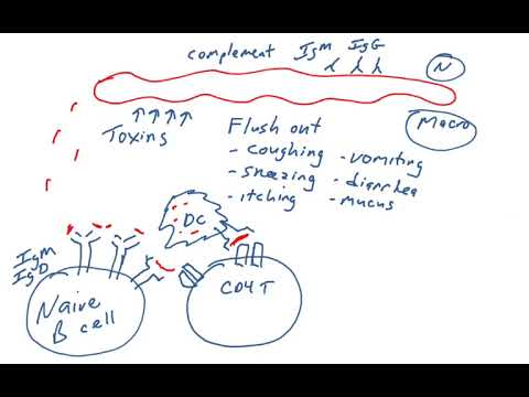 Hogyan kell kezelni a gyomorférgeket - Juh- és kecsketenyésztés