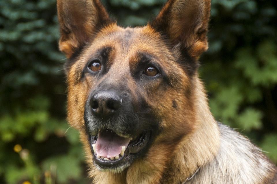 Giardia contagio uomo - Giardia hond besmettelijk voor mens