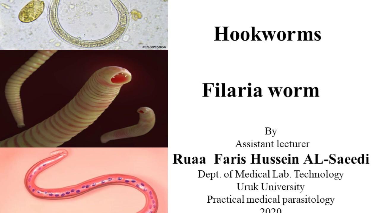 pinworm paraziták emberben