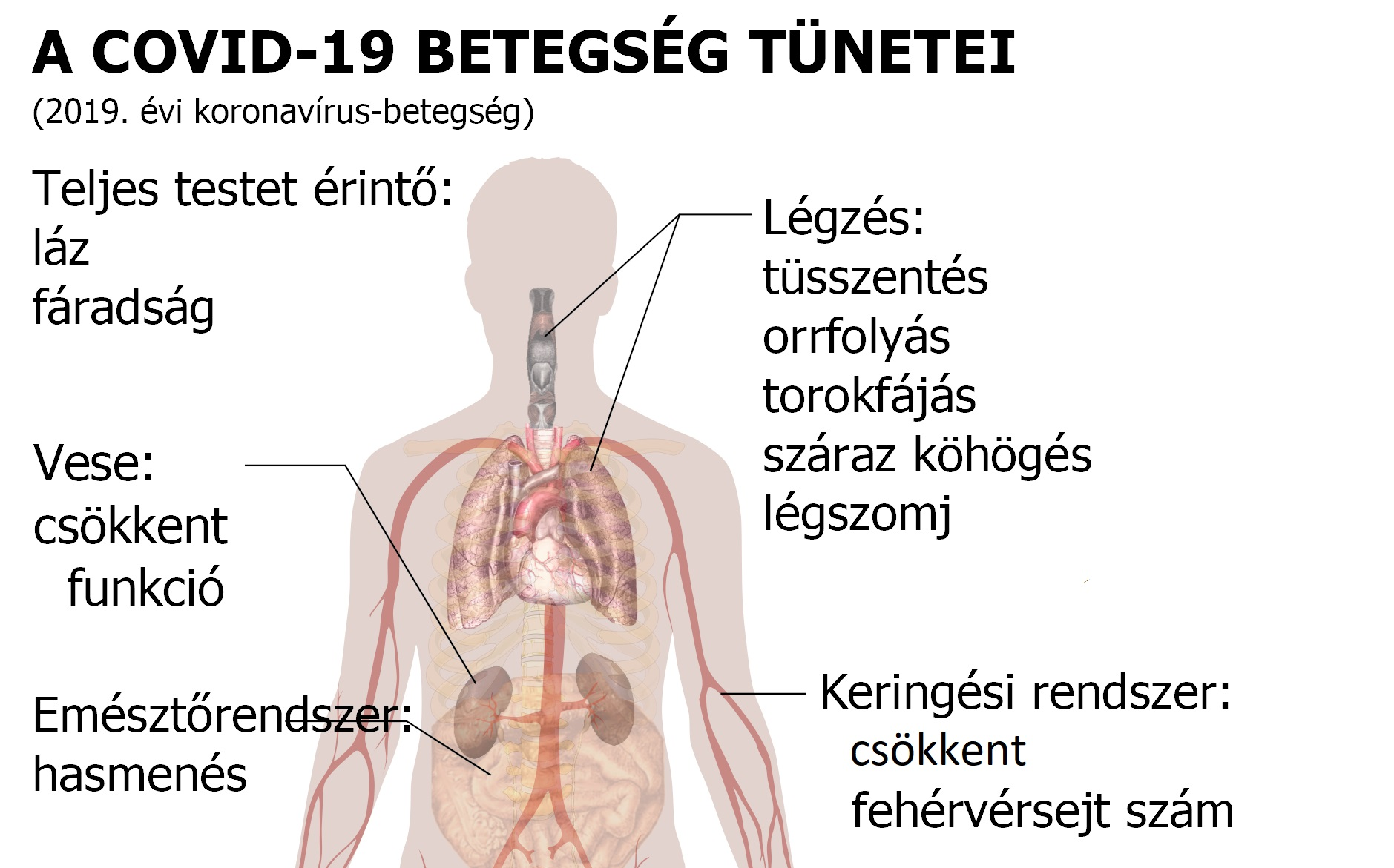 paraziták tünetei a felnőtt testben)