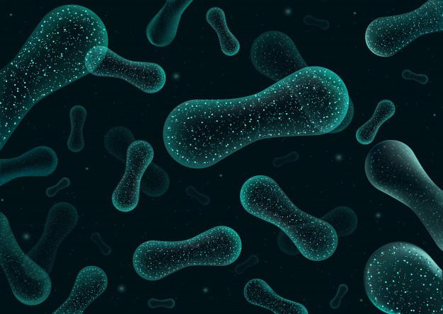 az emberek számára hasznos baktériumok