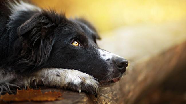 papilloma rákos kutyák