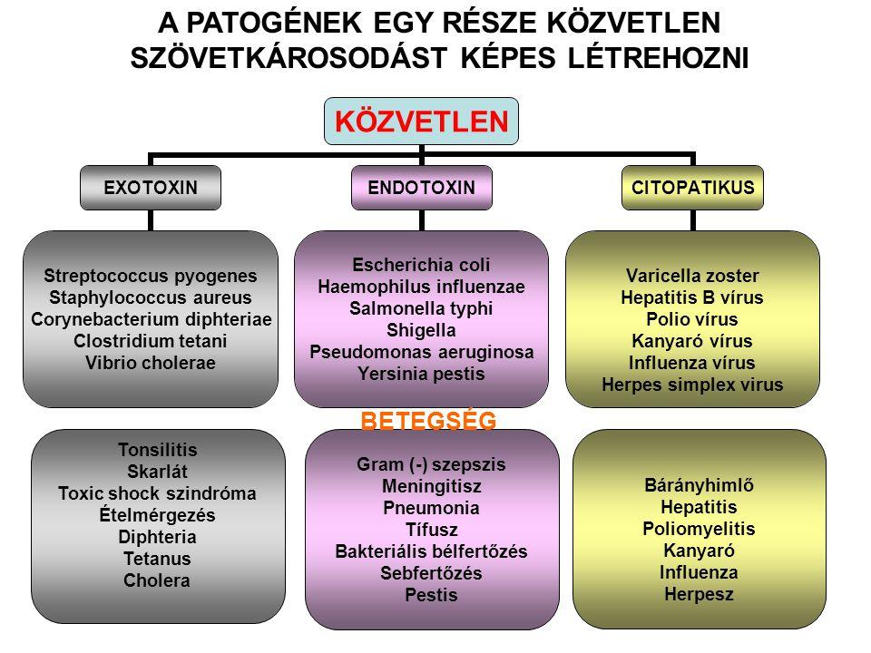 tífusz toxin)