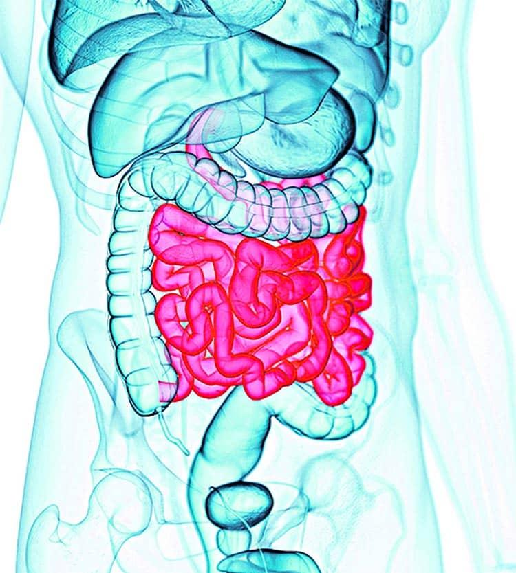 Húsevőbaktérium-fertőzés tünetei és kezelése