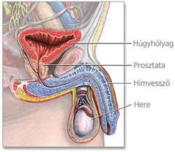 húgycső rák férfiaknál fejhallgató táblagépek