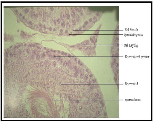 hasnyálmirigy méregtelenítő kezelés orrrák