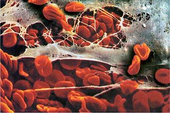 a vérlemezkék