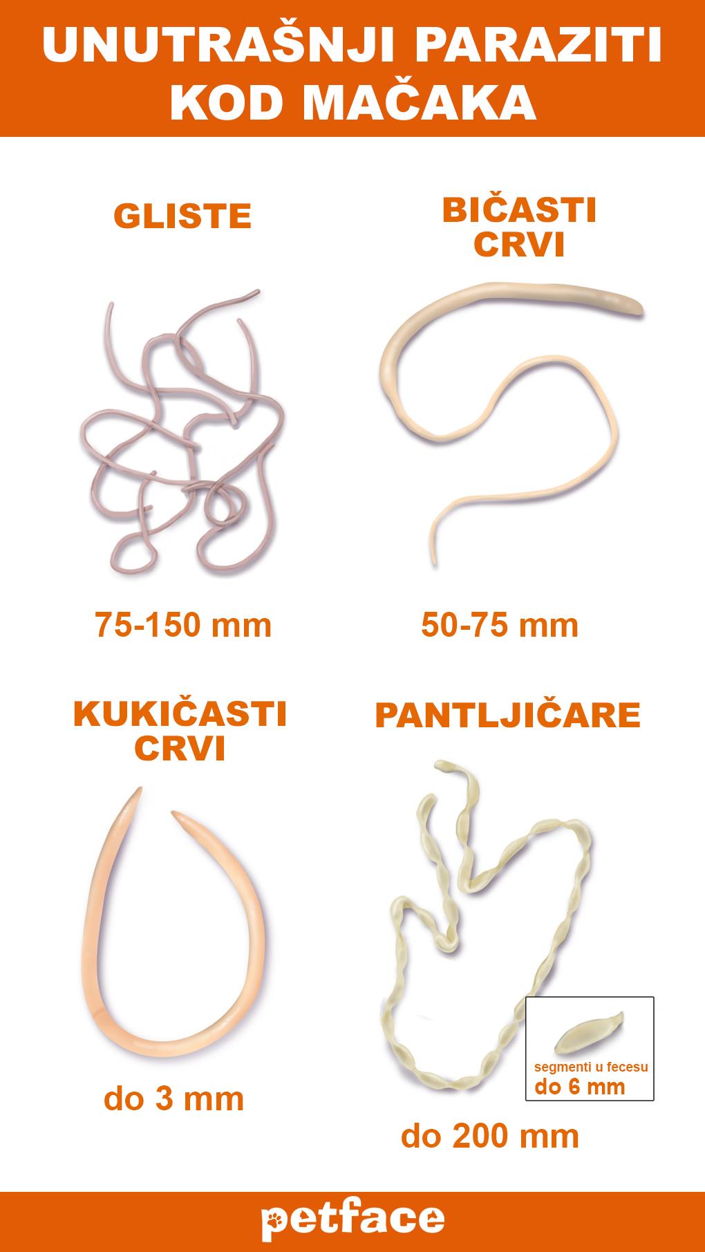 Giardia parazita