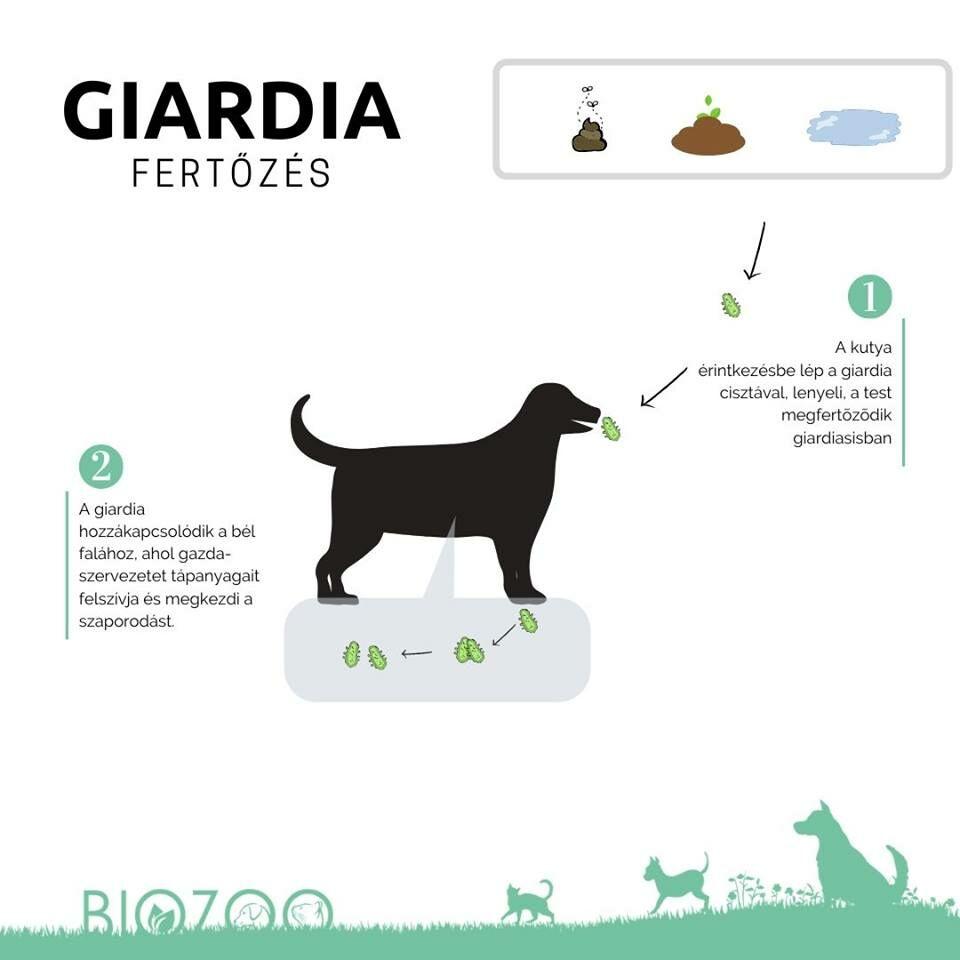 vakcina giardia kutyák mellékhatásai