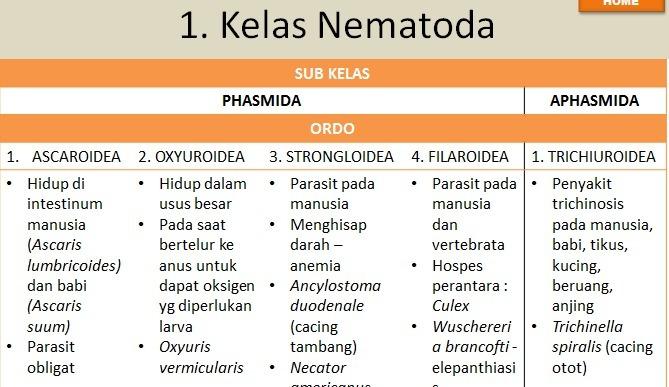 Kelas nemathelminthes cacing, Trichocephaliasis etiológiája