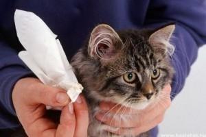 karcolások macskák füle kezelés