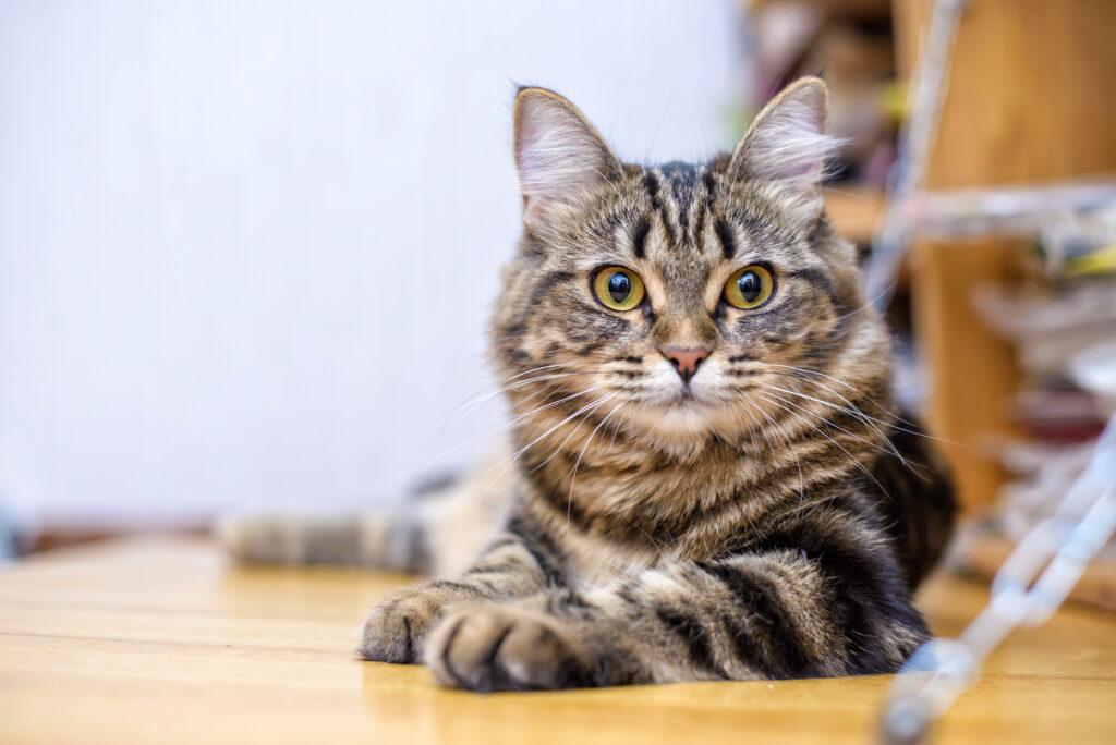 anzeichen fur giardien bei katzen)