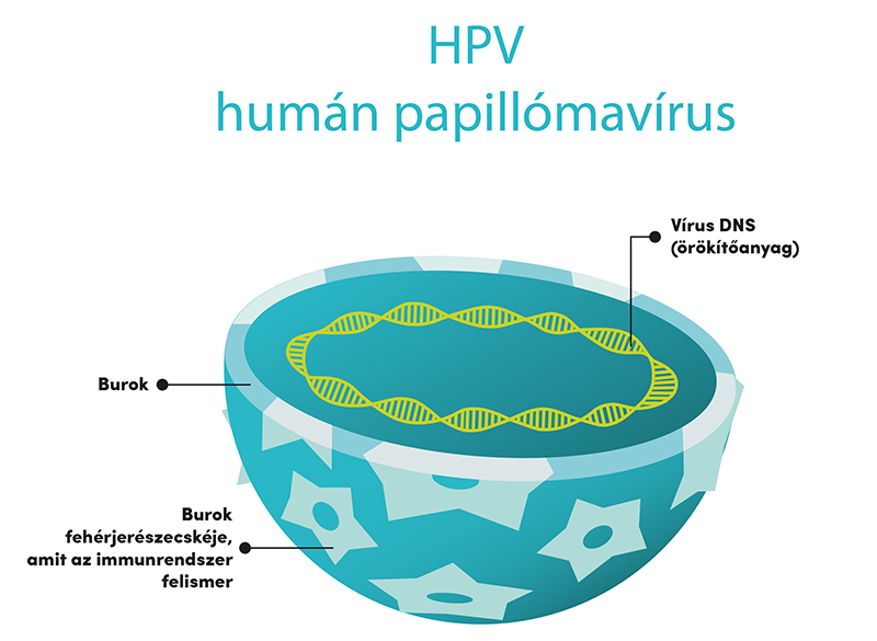 a papilloma vírus valószínű daganata)