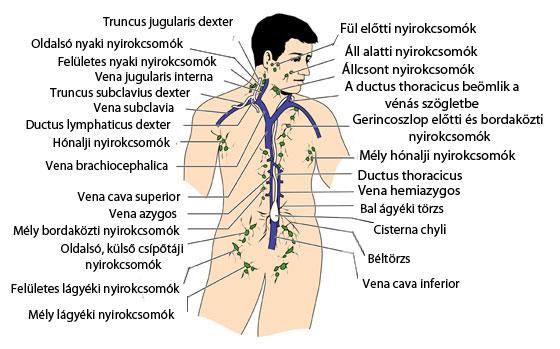 a nyak és a hónalj papillómáinak kezelése