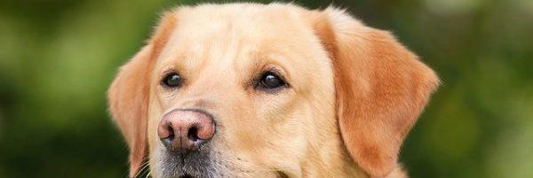 a kutyát kezelték)