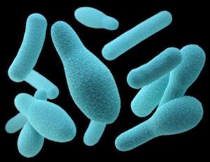 clostridium toxin b nehezen kezelhető