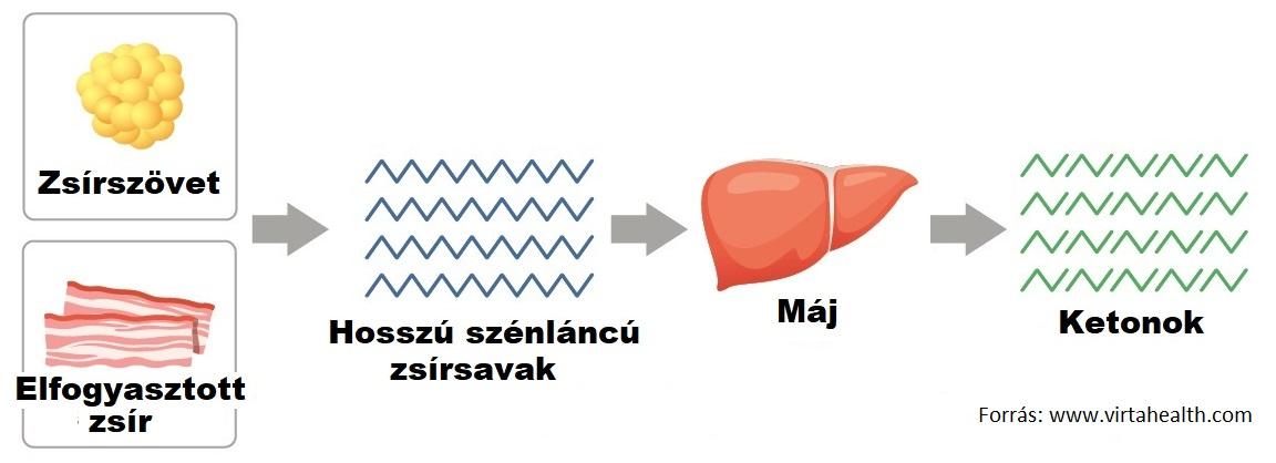 végbélrák versus aranyér rezorcinol a genitális szemölcsök kezelésében