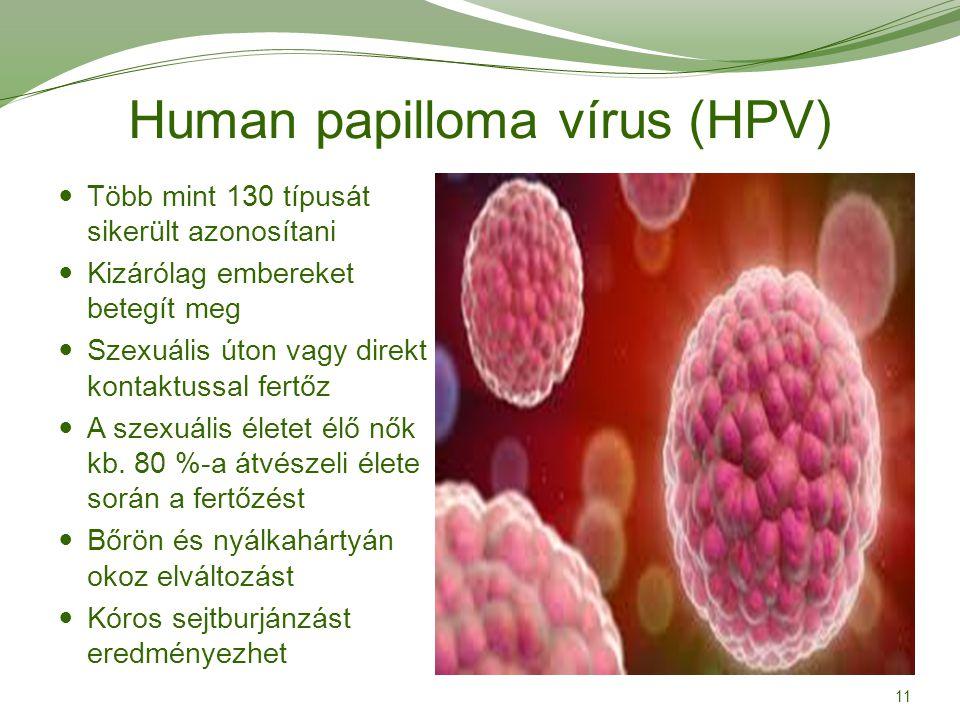 papilloma vírus fázisai