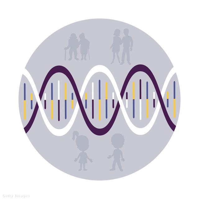Öröklődés, genetikai vizsgálatok | reproartinfo.hu