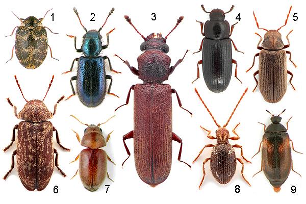 a rovarok elleni hazai módszer