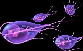 giardia fertőzés hosszú távú hatásai