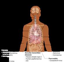 emberi papillomavírusok eredete