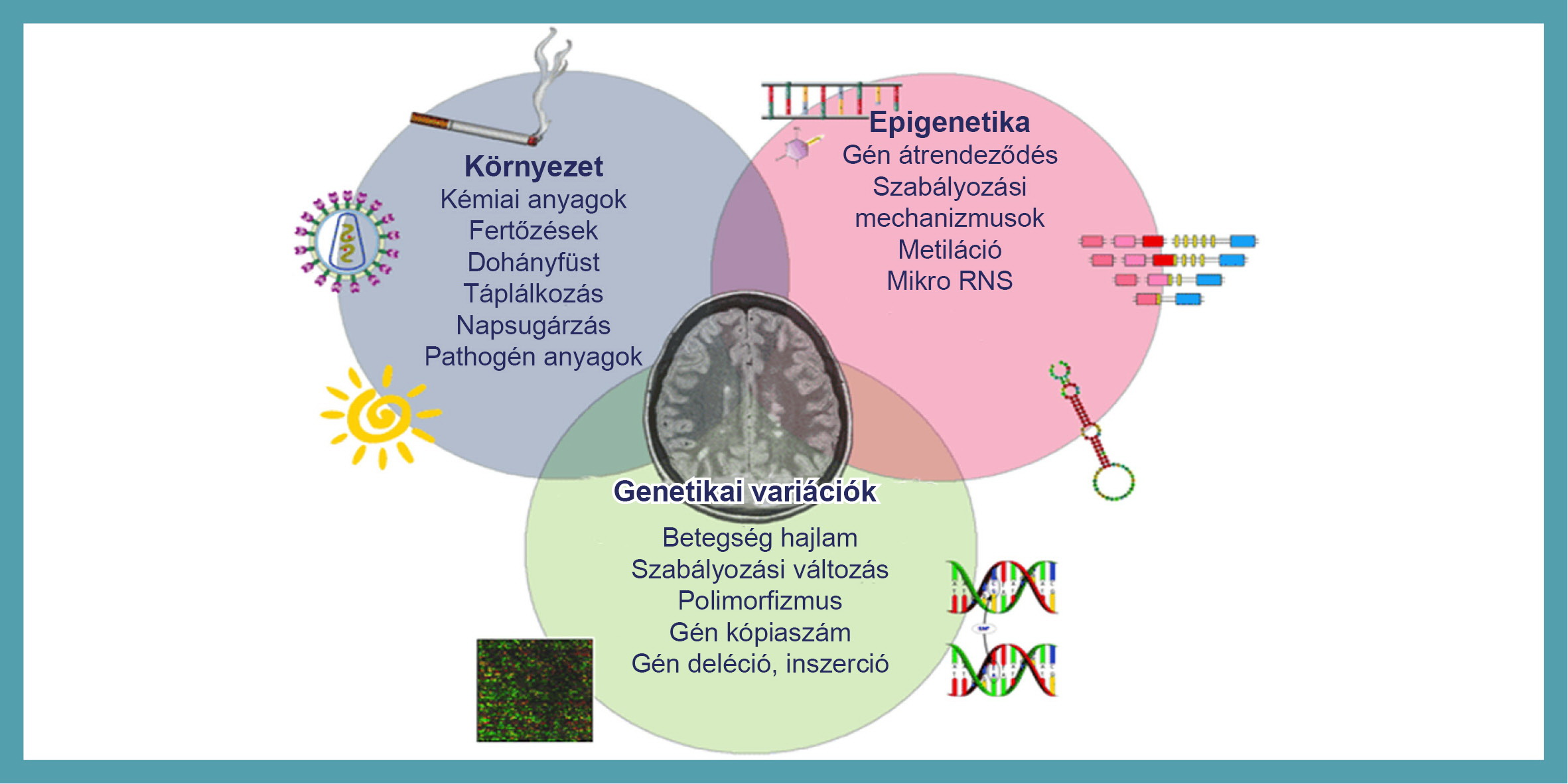 hosszú genetikai rák)