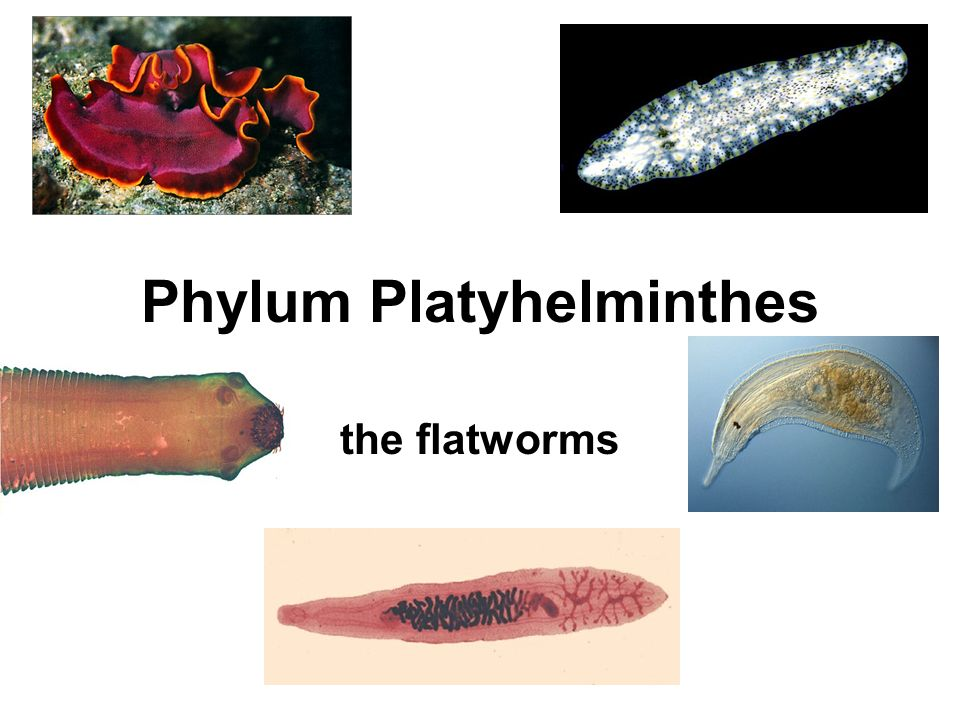 hólyag baktériumok