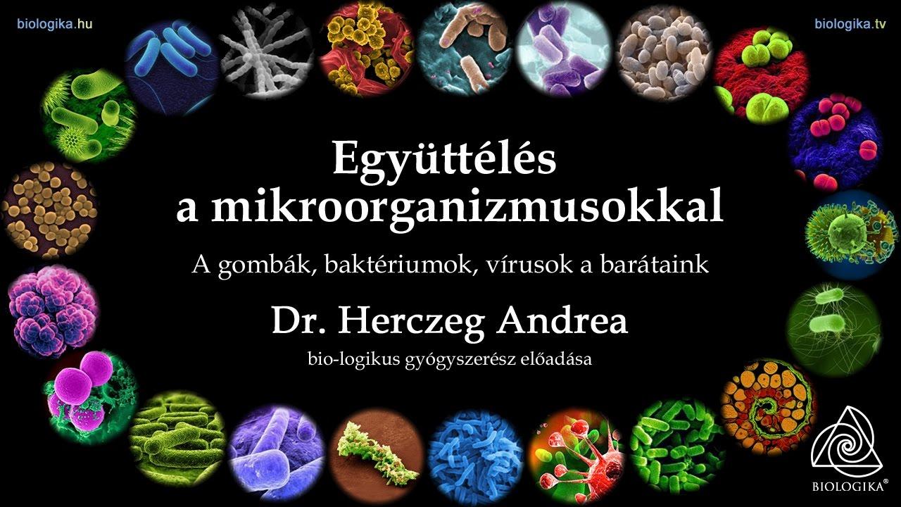 vírusok és baktériumok