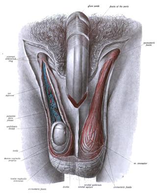 a nemi szerv rák tünetei)