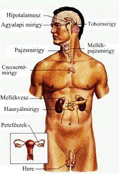 endokrin rák megelőzése)