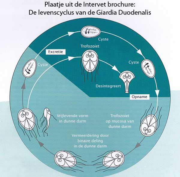 Giardia kat behandelen, Giardia inverted papilloma of nasal cavity icd 10