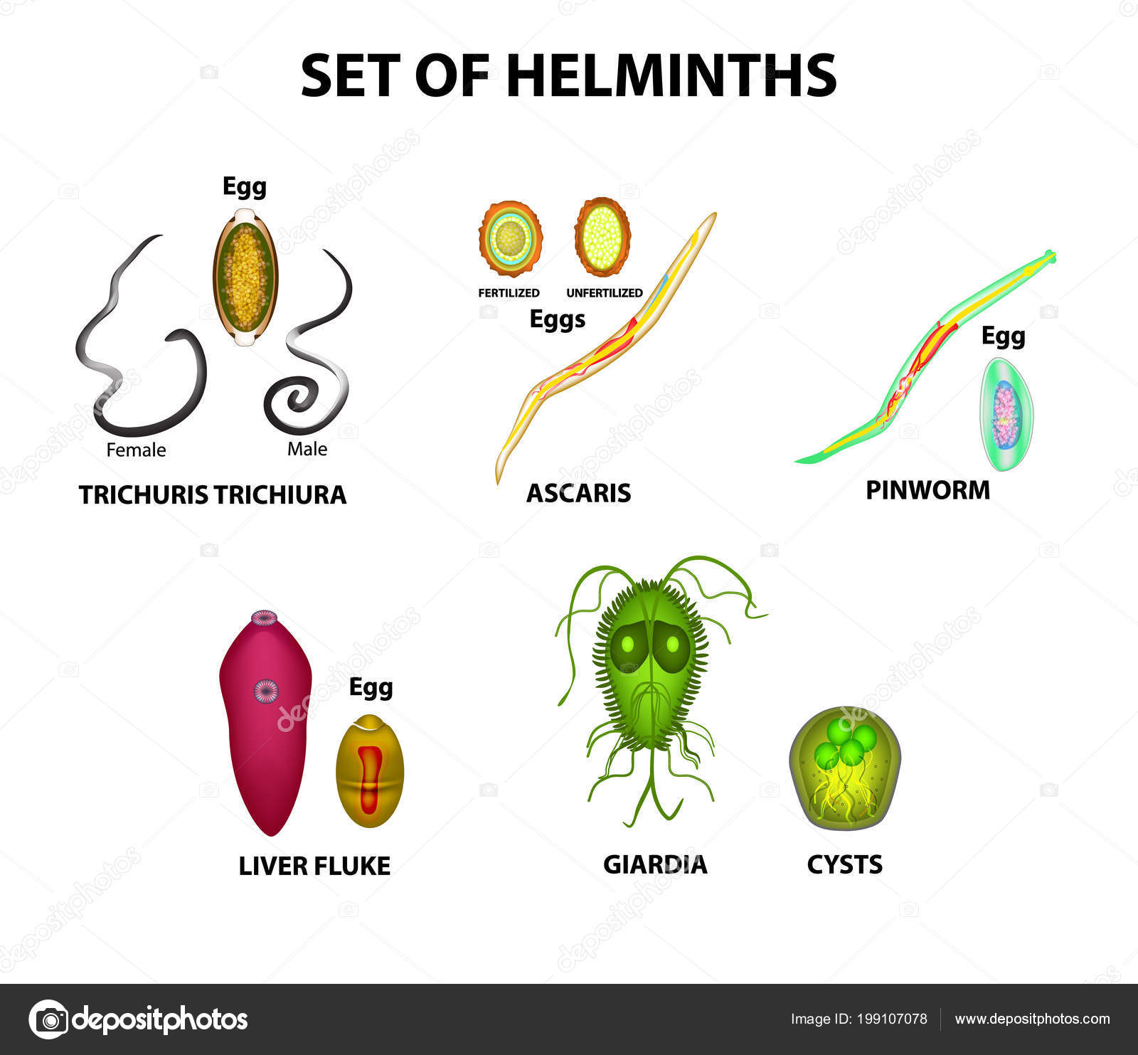 a talaj által hordozott helminthiasis megelőzése