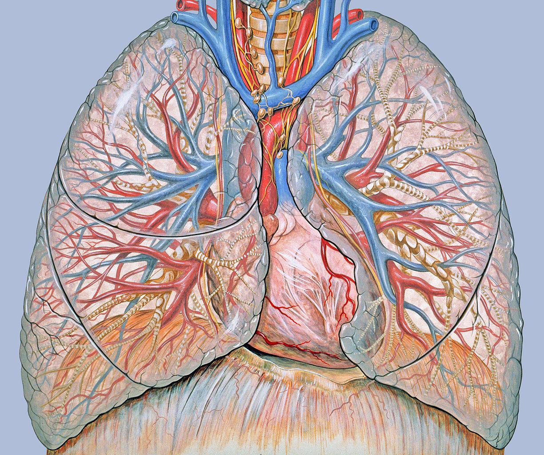 metasztatikus tüdőrák