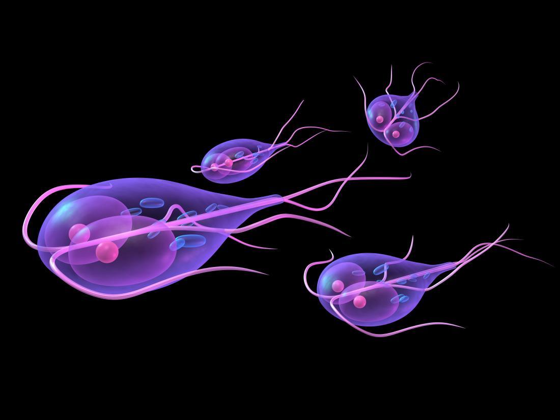 Giardia test. Házhoz szállítás bármely magyarországi címre
