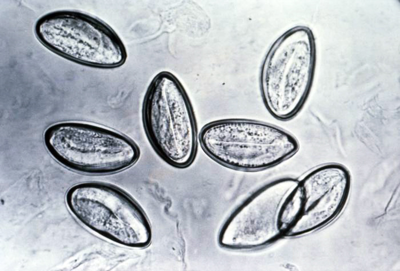 Hpv virus tunetei szajban Papilloma kezelese nyelven