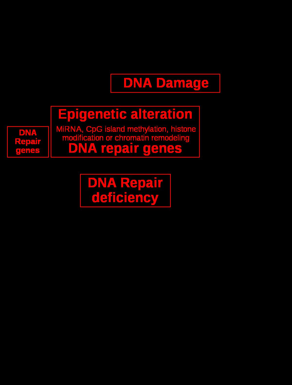 rák genetikai száma