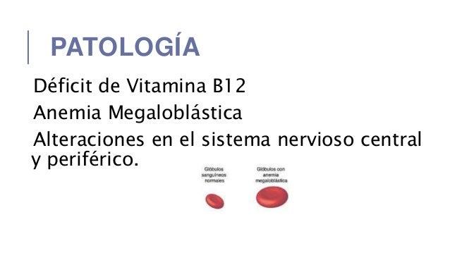 a diphildobothriasis fejlődési ciklusa)