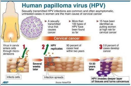 papillomavirus avis)
