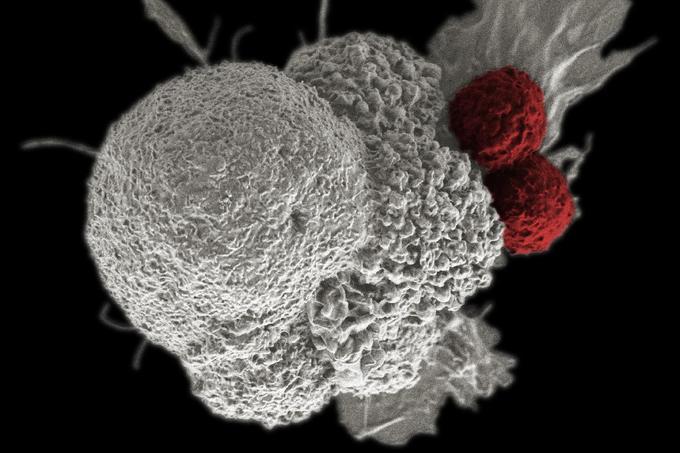 rák agresszív meghatározása