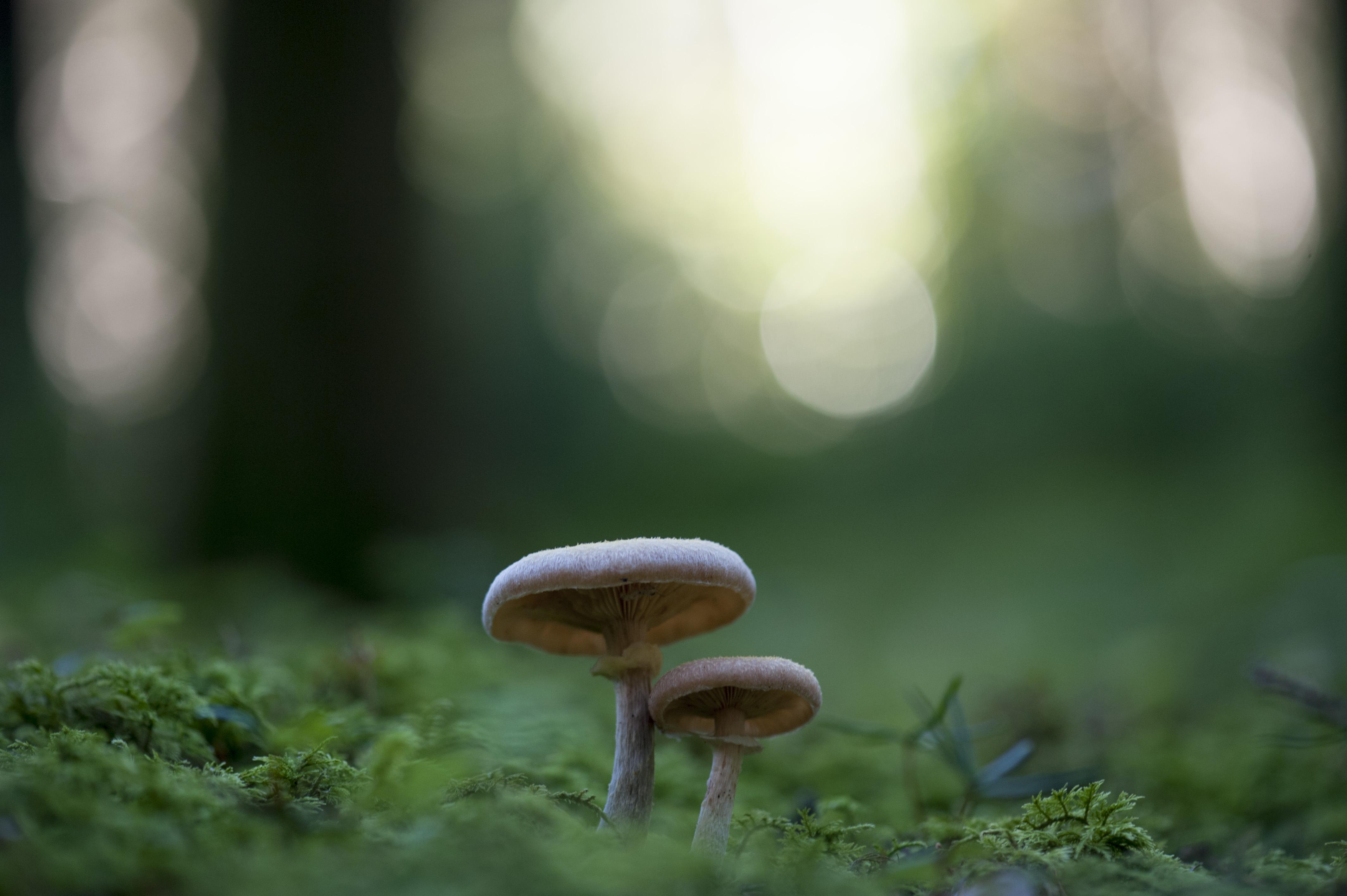 a gombák károsodása