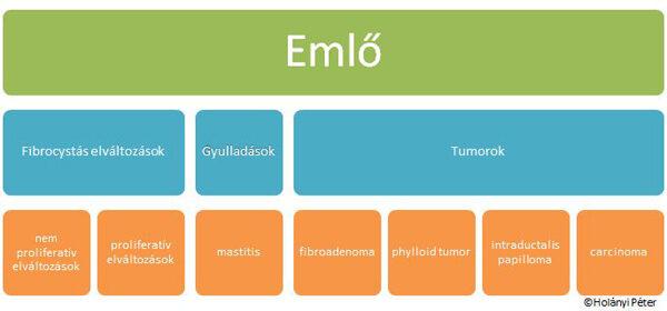 Emlőrák / Tumoros megbetegedések / Témák / Kérdések - válaszok / HáziOrvos