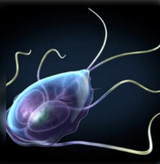 a bőr parazita képei